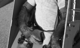 When a chimpanzee landed on the Moon: the saga of Boris (part 1)