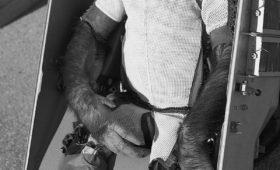 When a chimpanzee landed on the Moon: the saga of Boris (part 1)