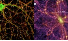One of These Pictures Is the Brain, the Other is the Universe. Can You Tell Which is Which?