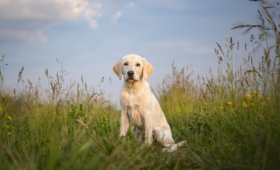 Pet insurance: Is a pricey policy worth it?